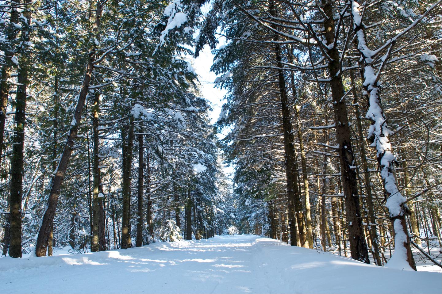 Val-Saint-Francois paysage hiver